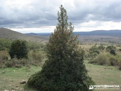 Parque Natural Sierra de Cebollera (Los Cameros) - Acebal Garagüeta;madeira senderismo en jaca